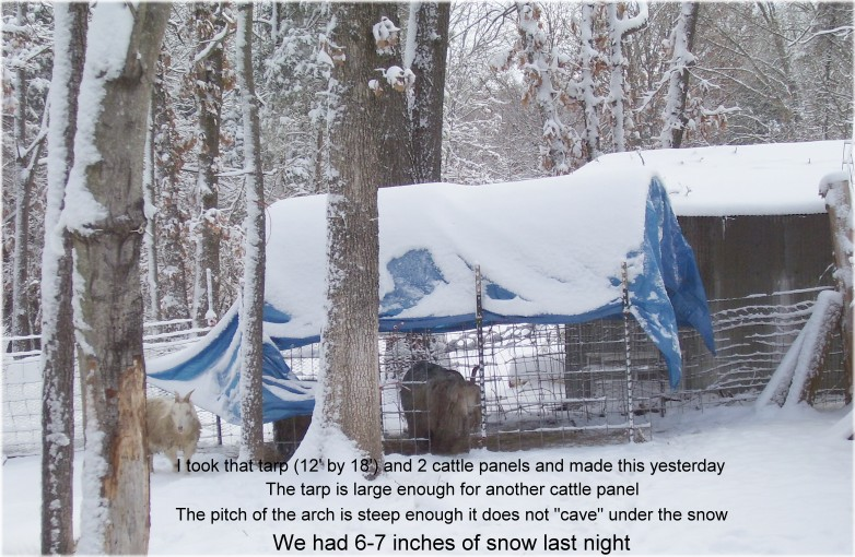 Goat Shelter using Tarps and cattle panels