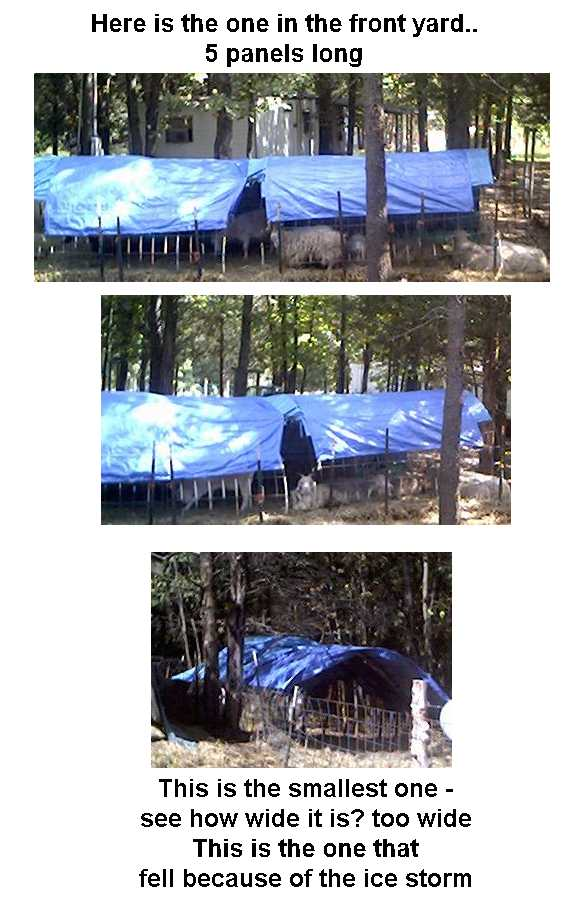 Tarp and cattle panel shelter for goats