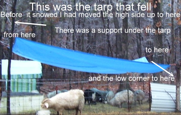 Tarp that fell on goat killing it